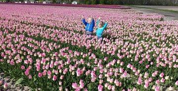 Dagtocht Tulpen