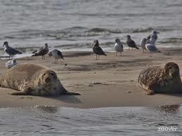 Dagtocht Meestoof en zeehondensafari